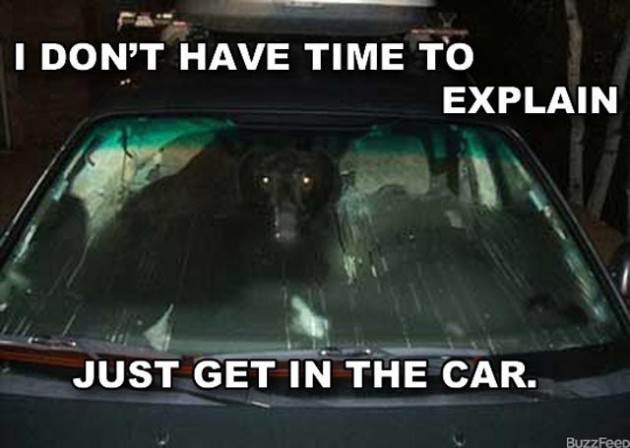 No-time-to-explain-animal-car-6