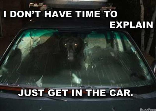 No-time-to-explain-animal-car-6